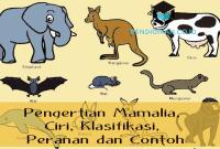 Pengertian Mamalia, Ciri, Klasifikasi, Peranan dan Contoh