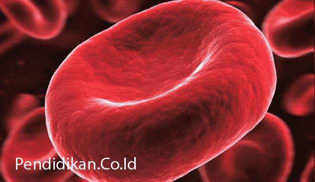 Pengertian Darah, Fungsi, Komponen dan Kandungan