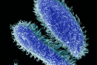 Pengertian Protozoa, Jenis, Ciri, Klasifikasi & Reproduksi
