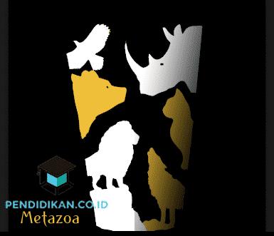 Pengertian Metazoa, Klasifikasi, Ciri, dan Siklus