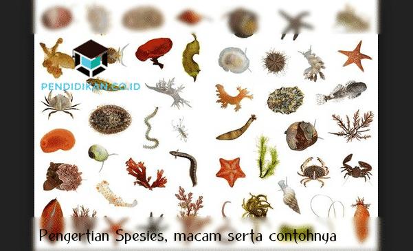 Pengertian Spesies, macam serta contohnya