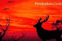 Pengertian Makhluk Hidup Klasifikasi dan ciri-ciri makhluk hidup