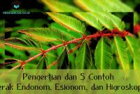 Pengertian dan 5 Contoh Gerak Endonom, Esionom, dan Higroskopis
