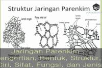 Jaringan Parenkim : Pengertian, Bentuk, Struktur, Ciri, Sifat, Fungsi, dan Jenis