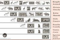 Pengertian Taksonomi, Tingkatan dan Contohnya