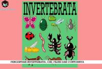 Pengertian Invertebrata, Ciri, Filum dan Contohnya