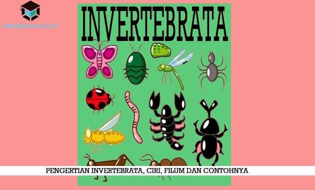 88 Koleksi Gambar Struktur Hewan Invertebrata Gratis