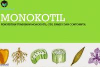 Pengertian Tumbuhan Monokotil, Ciri, Family dan Contohnya