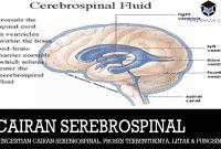 Pengertian Cairan Serebrospinal, Proses Terbentuknya, Letak dan Fungsinya
