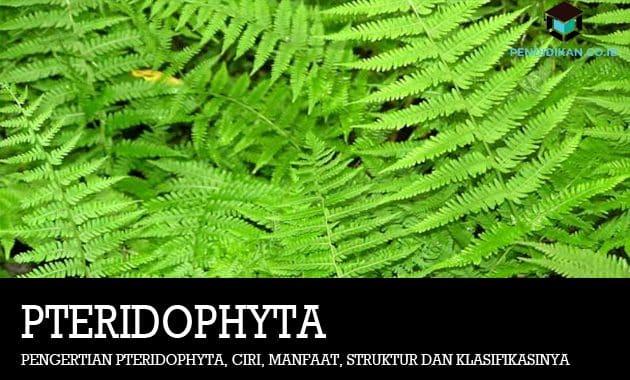 Pengertian-Pteridophyta