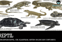 Pengertian Reptil, Ciri, Klasifikasi, Sistem Organ dan Contohnya