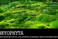 Pengertian Bryophyta, Ciri, Struktur, Klasifikasi, Siklus dan Manfaatnya