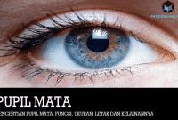 Pengertian Pupil Mata, Fungsi, Ukuran, Letak dan Kelainannya