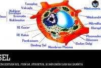 Pengertian SEL, Fungsi, Struktur, Komponen dan Bagiannya