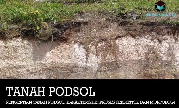 Pengertian Tanah Podsol, Karakteristik, Proses Terbentuk dan Morfologi