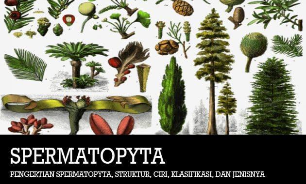 Pengertian Spermatopyta, Struktur, Ciri, Klasifikasi, dan Jenisnya
