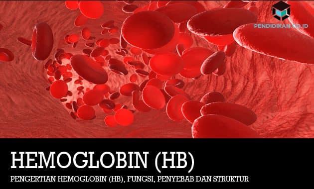 Pengertian Hemoglobin (Hb), Fungsi, Penyebab dan Struktur