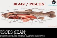 Pengertian Pisces, Ciri, Struktur, Klasifikasi dan Contoh