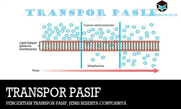 Pengertian Transpor Pasif, Jenis Beserta Contohnya