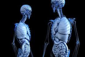 Ligament-Aksesorium