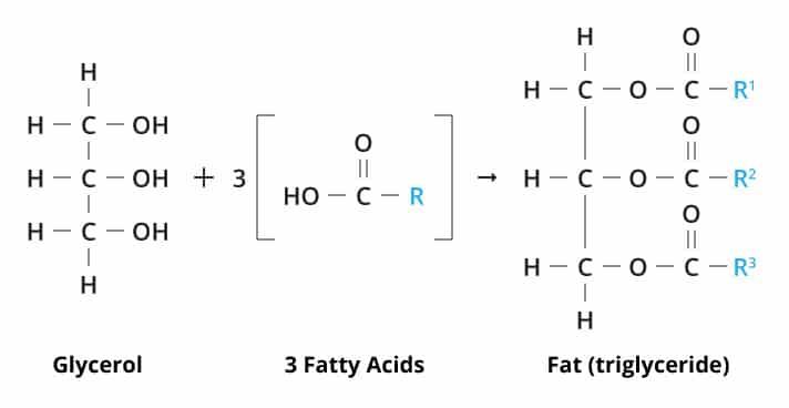 kelompok-lemak-berdasarkan-komponen-penyusunnya