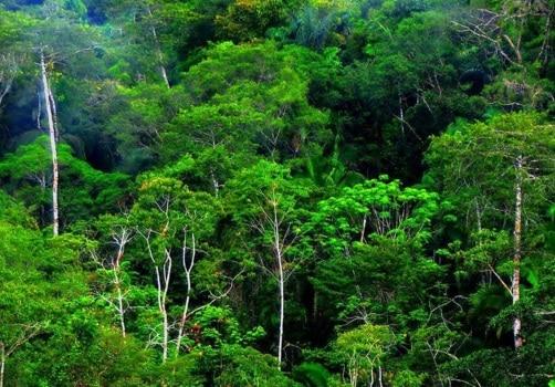 Daerah-Hutan-Basah