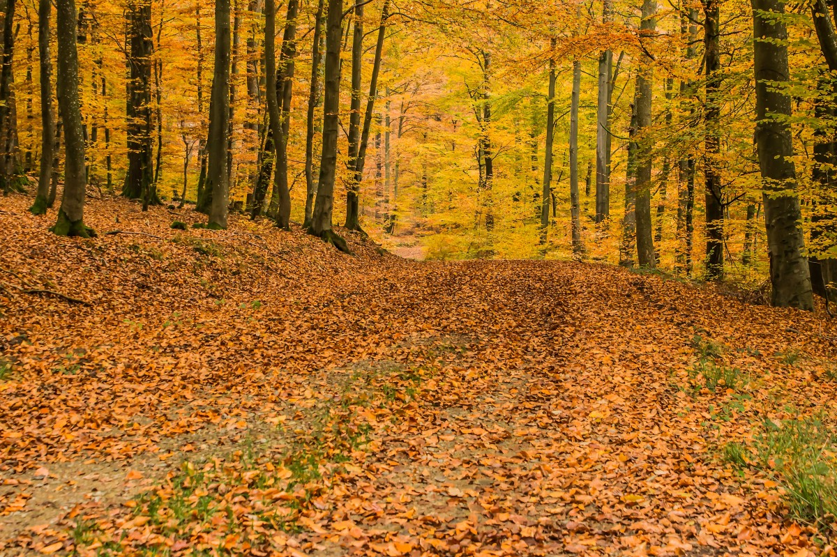 Daerah-Hutan-Gugur