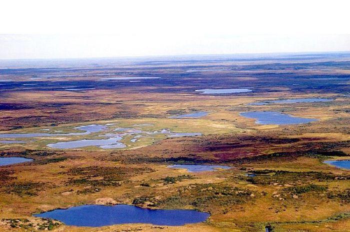 Daerah-Tundra