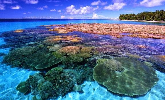 Habitat-Laut