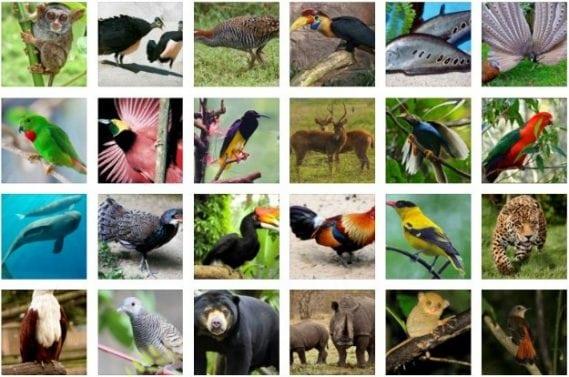Karakteristik-Fauna