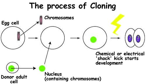 Kloning-Gen