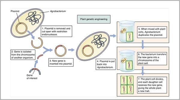 Konstruksi-Gen