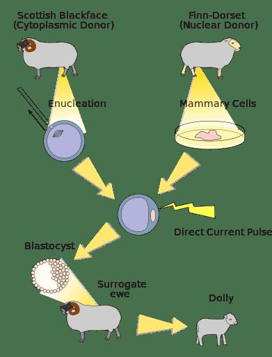 Manfaat-Rekayasa-Genetika