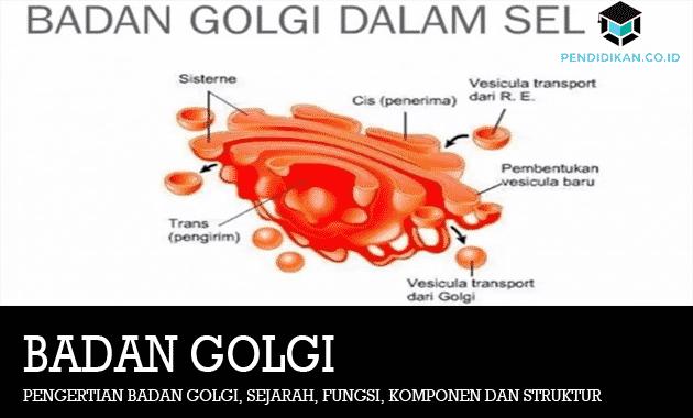 Pengertian-Badan-Golgi