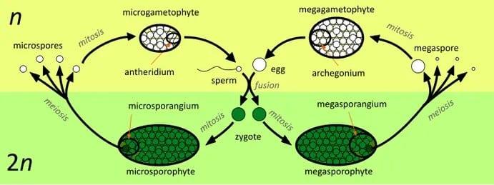 Proses-Metagenesis-kompleks