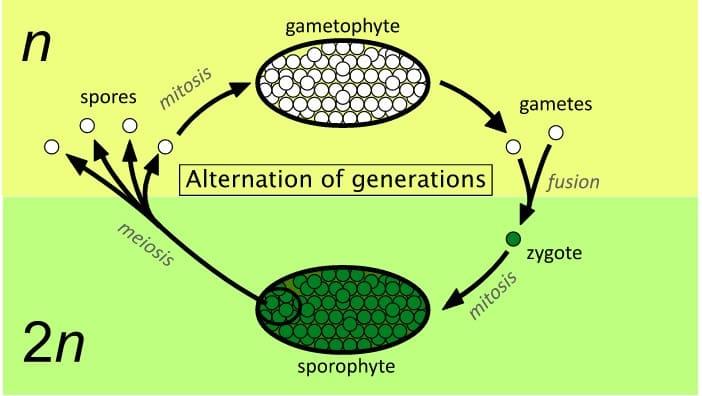 Proses-Metagenesis