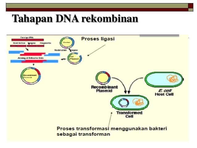 Rekombinasi-DNA
