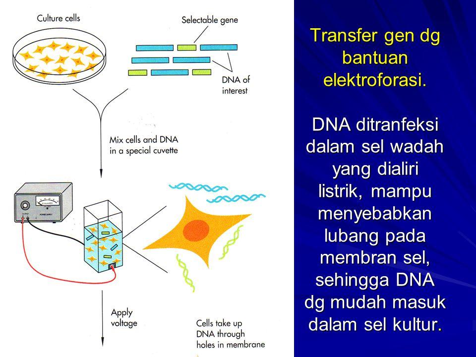 Transfer-gen-ke-dalam-sel