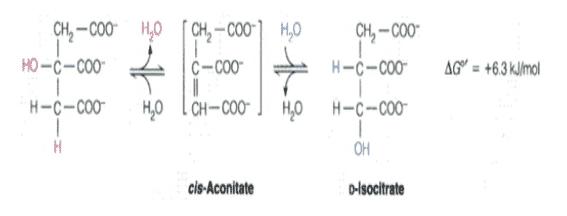 Isomerase-Sitrat