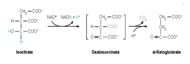 Isositrat-Dehidrogenase
