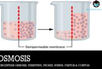 Pengertian-Osmosis