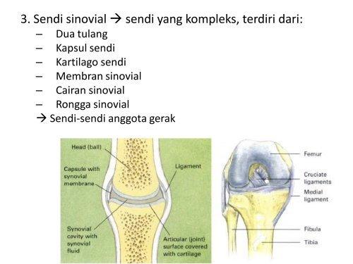 Sendi-Sinovial