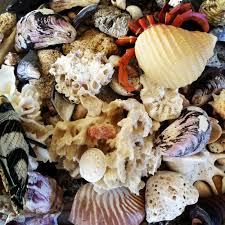 Tipe-Cangkang-Gastropoda