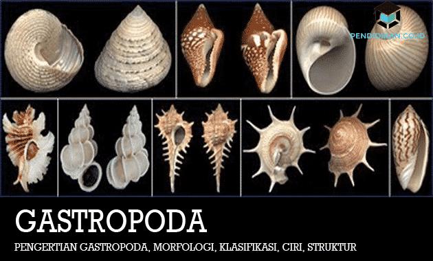 pengertian-gastropoda