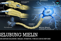 pengertian-selubung-mielin