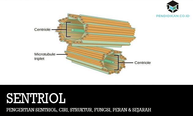 pengertian-sentriol