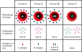 Karakteristik-Antigen