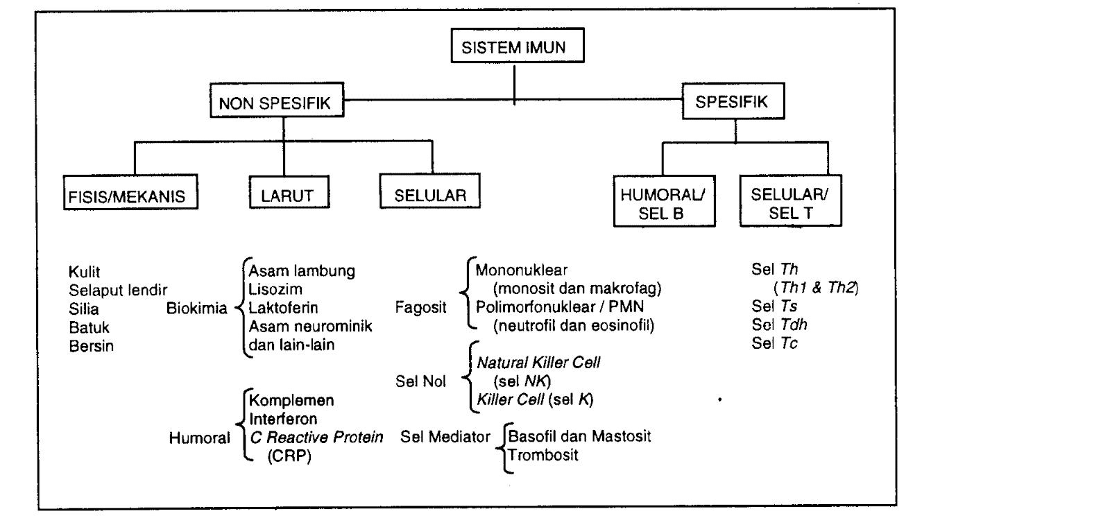 Klasifikasi-Sistem-Imun