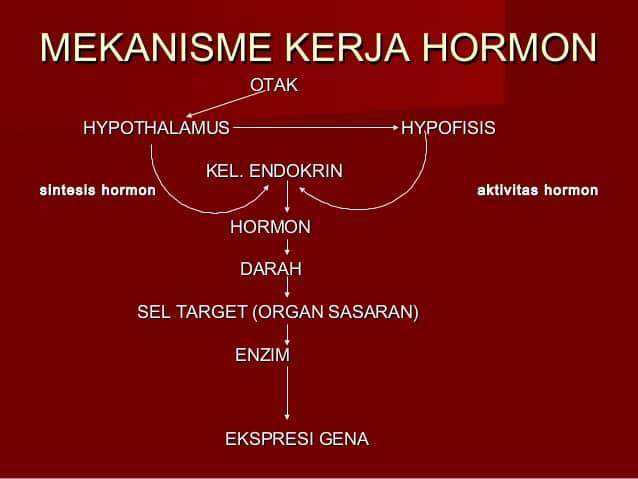 Sistem-Kerja-Hormon