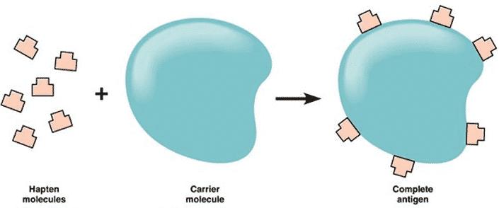 Struktur-Antigen